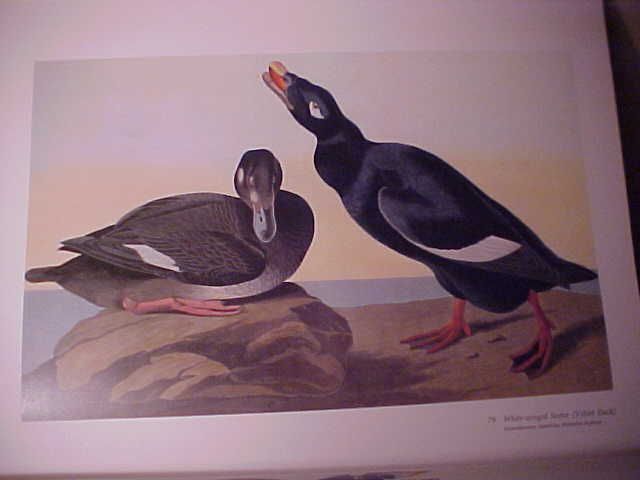 Image for Audubon's Birds Of America (The Audubon Society Baby Elephant Folio)